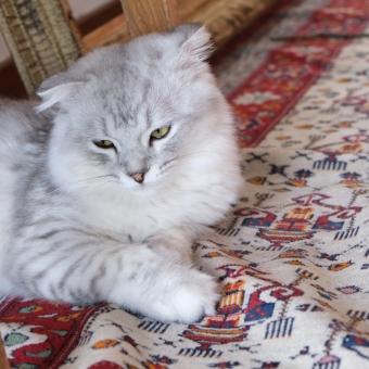 絨毯,キリム,カーペットの買取り,査定